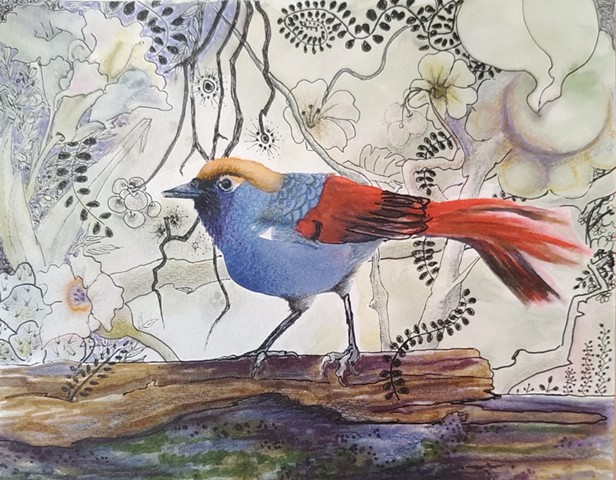 Red-tailed Laughing Thrush, beautiful red and blue bird painting in watercolors, markers, ink on 140 lb watercolor paper by M. Christine Landis