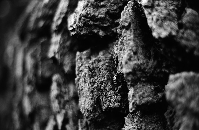 'Bark Detail' 35mm 2018