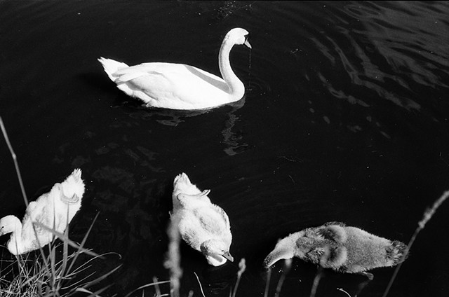 High Park 35mm black white wildlife habitat