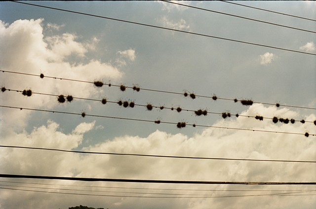 'Burrs on a Wire'