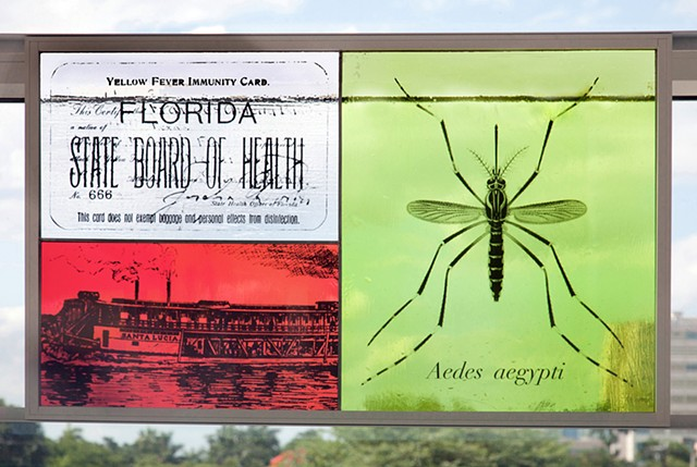 Yellow Fever panel with Immunity Card, Aedes aegypti mosquito, Steamboat Santa Lucia used for quarantine  Photo by Robin Hill