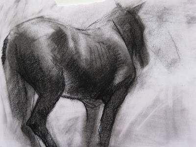 Horse form Animal Study's