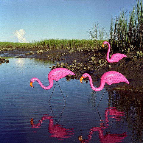 Caribbean Flamingos, Everglades National Park