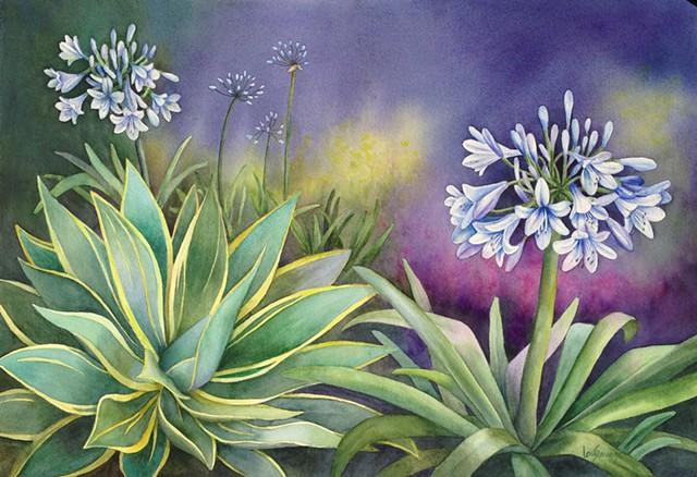 Santa Barbara Flora