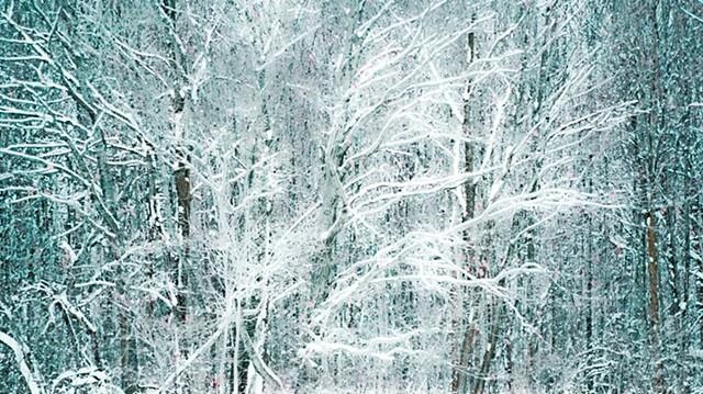 Winter Web.