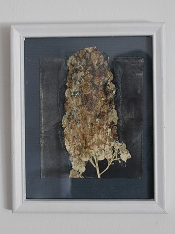 Archived Crushed Plant Print Series