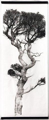 ink drawing, japanese paper, paper, trees, wilderness, drawing