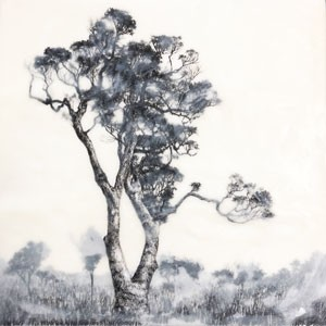 charcoal, paper, trees, drawing, landscape, australia, encaustic, wax, ink
