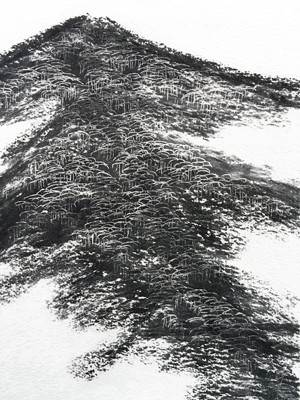 charcoal, paper, trees, drawing, landscape, australia