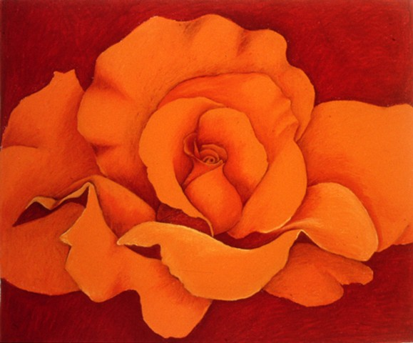 Orange Rose on Red