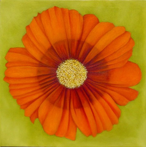 Orange Cosmos on Green