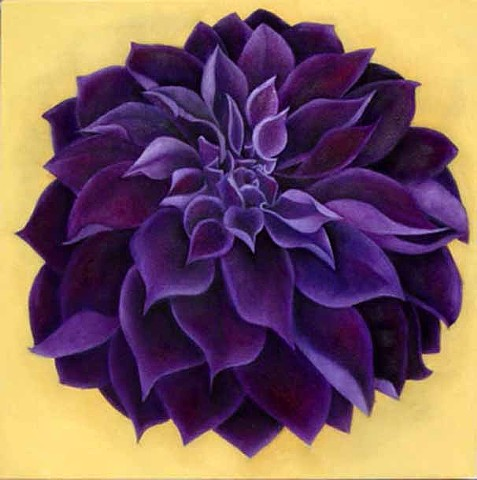 Purple Dahlia on Yellow