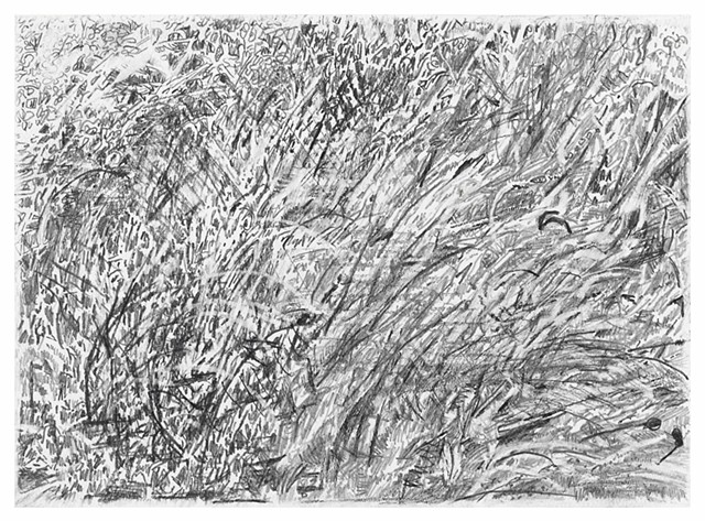 Blowing Grass Study