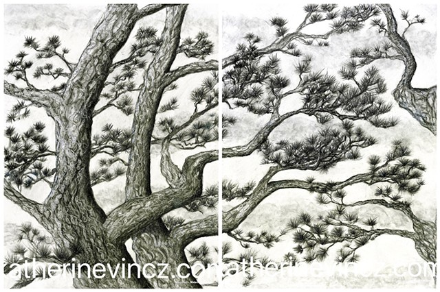 diptych of Japanese red pines in charcoal