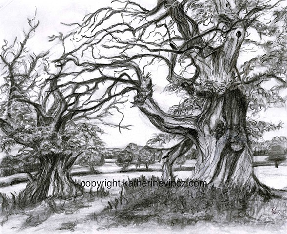 croft castle, spanish chestnut trees, trees, charcoal art
