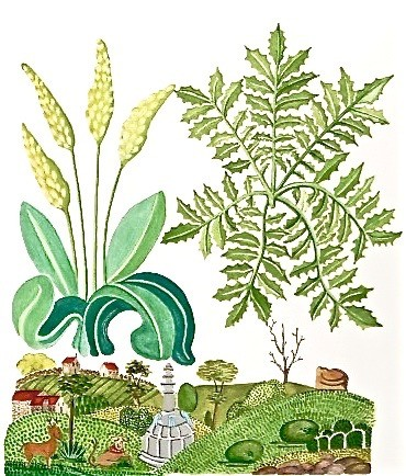 Adaptation of Helmingham's Herbal Bestiary c.1500