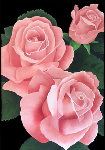 Three vibrant pink roses on black background