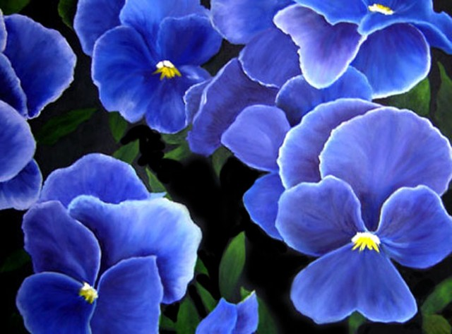 Purple-blue violets with green leaves on black background, graphic, vibrant