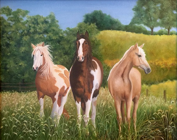Three horses, best friends, in tall grass, enjoying the summer