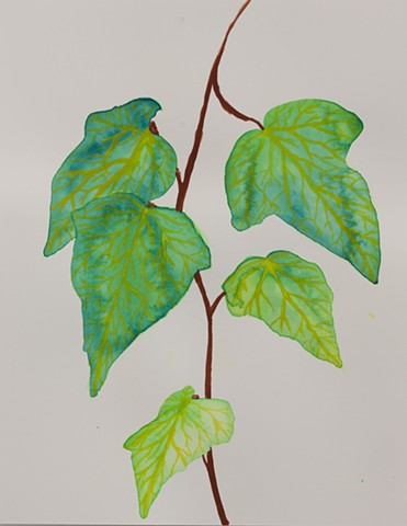 Leaves on a Vine