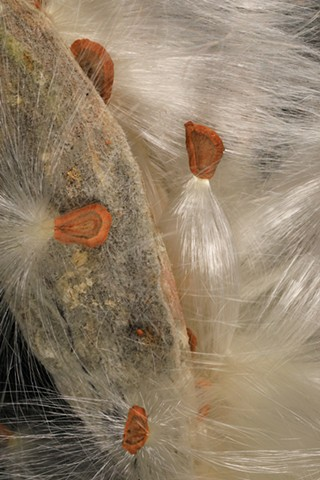 Glotzbach, Greg, Glotzbach, Greg Glotzbach, Photogapher, milkweed,  Fine Art, I, we, creative, thought, engaging, unique, Physics, Quantum, springboard, aesthetics, climate, reactions, sociopolitical, P=milkweed&hspart=