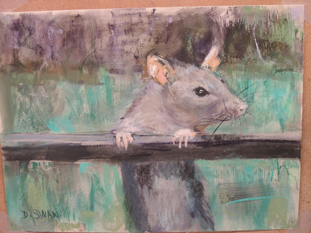 Rat at Fence