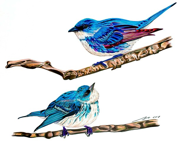 Fine art colored pencil drawing of endangered Cerulean warblers by Alyson Dana Singer