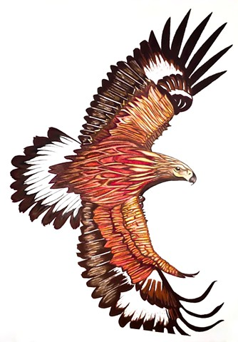 Golden eagle, raptors, birds of prey, drawing, eagle in flight, bird artwork, wildlife artwork