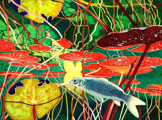 Koi Fish, Underwater, Lily Pads, Water, Reflections,Colorful , Colored Pencils