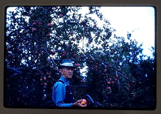 Apple Orchard worker