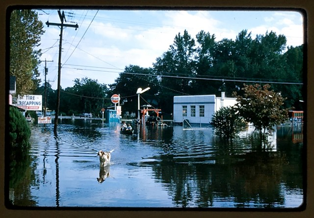 Flood and dog