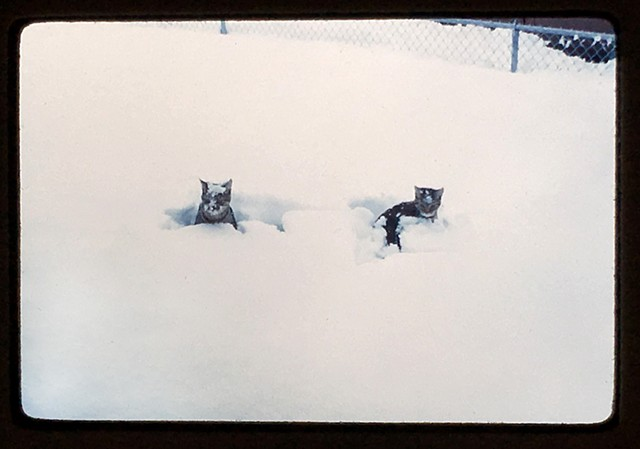 Two cats in the snow