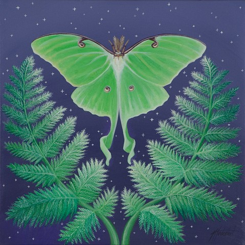 Luna Moth and Fern