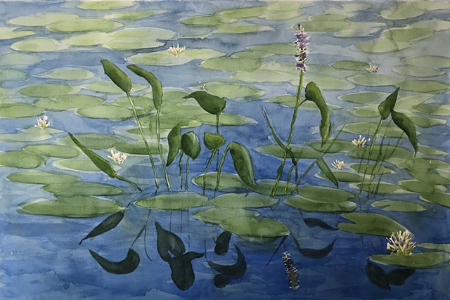 Water Lilies on Round Pond