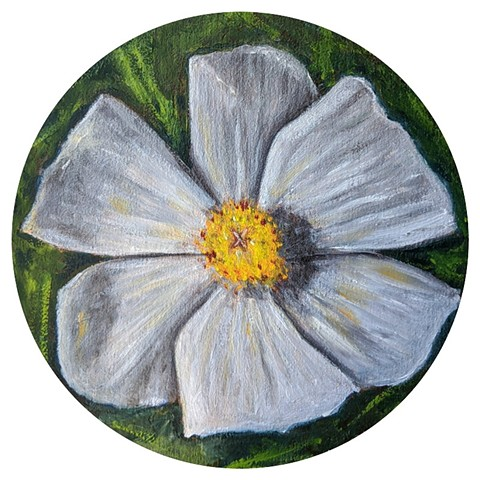 """White Poppy""  Oil on wood panel rotunda"