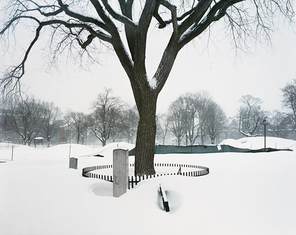 Washington Elm [view #24, during a winter storm], Cambridge, MA, February 10, 2015