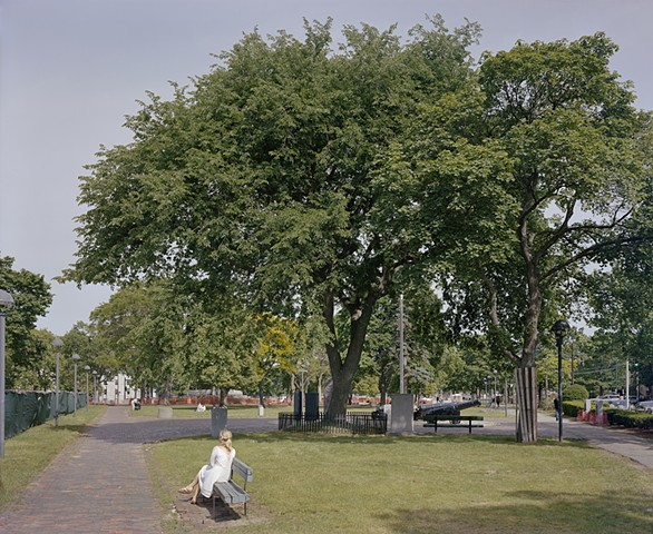The Washington Elm [view #26], Cambridge MA, August 2014