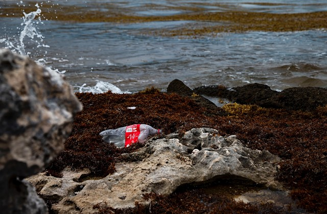 The seaweed collects garbage, which can disturb fishermen as well as the preexisting ecosystem, causing detrimental issues in a town that already has incredibly weak garbage and sewage systems, made even weaker by the influx in tourism in recent years.