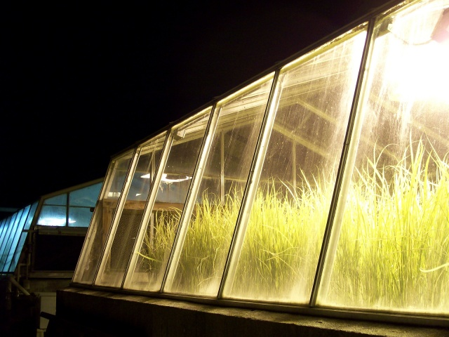 GMO Research Greenhouse