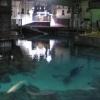 Marine Environment Simulation Tank (Pacific)