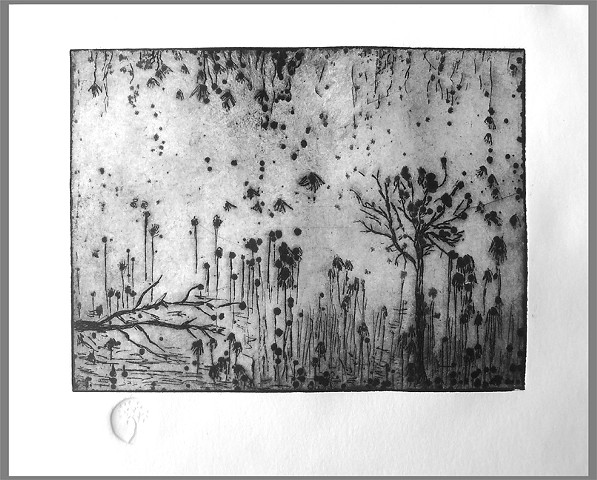 etching, black and white art work, drawings, original art work, cheap art work, abstract art,Galilee art work, nature art,