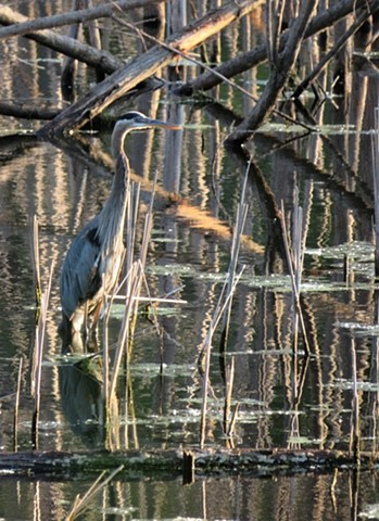 The Hidden Heron Diana Ries