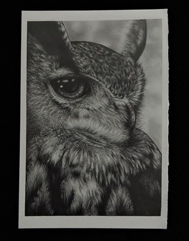 Portrait of an Owl Aubrey Campbell