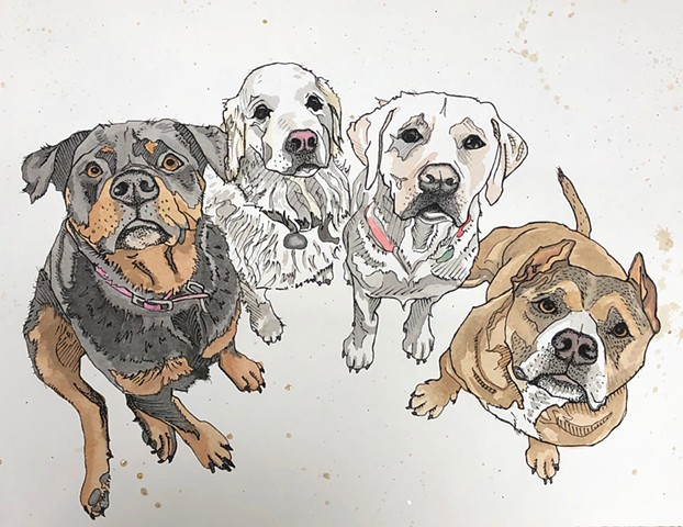 Pet portrait, the gang