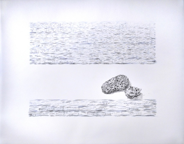 Joanne Aono Lake Michigan fossil coral drawing