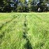 Ghost Farm Field
