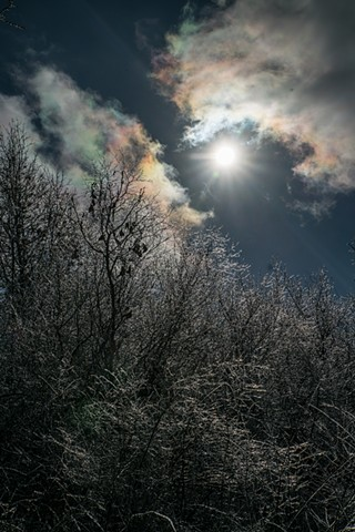 frozen trees and january halo