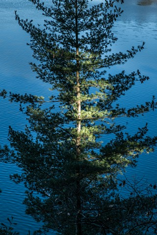 spot light on a pine by lake