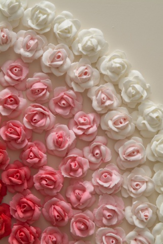 American Beauty Rose (Detail)