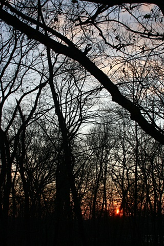 Picture of Park at Dusk